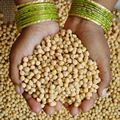 chickpeas-India-120-web