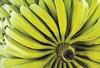 II.3.3 Bananas-plantains-jpeg-100