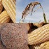 n.palmer ciat-maize-rice-sorghum-web-square-small