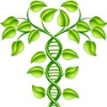plant-dna-web-square